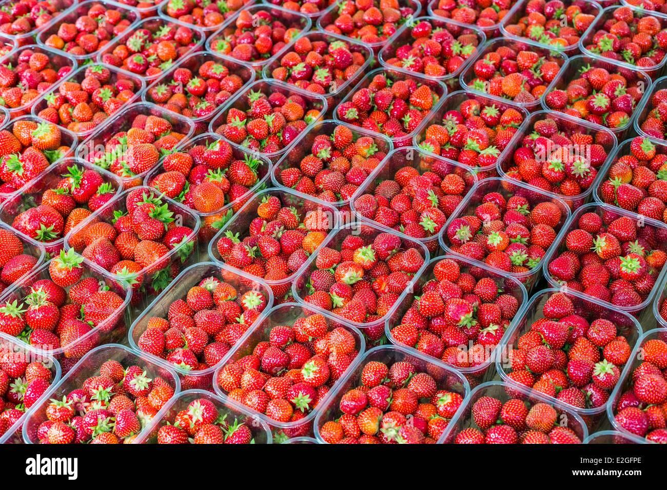 Países Bajos Holanda del Sur Rotterdam Binnenrotte fresas en el mercado más grande del país país Imagen De Stock