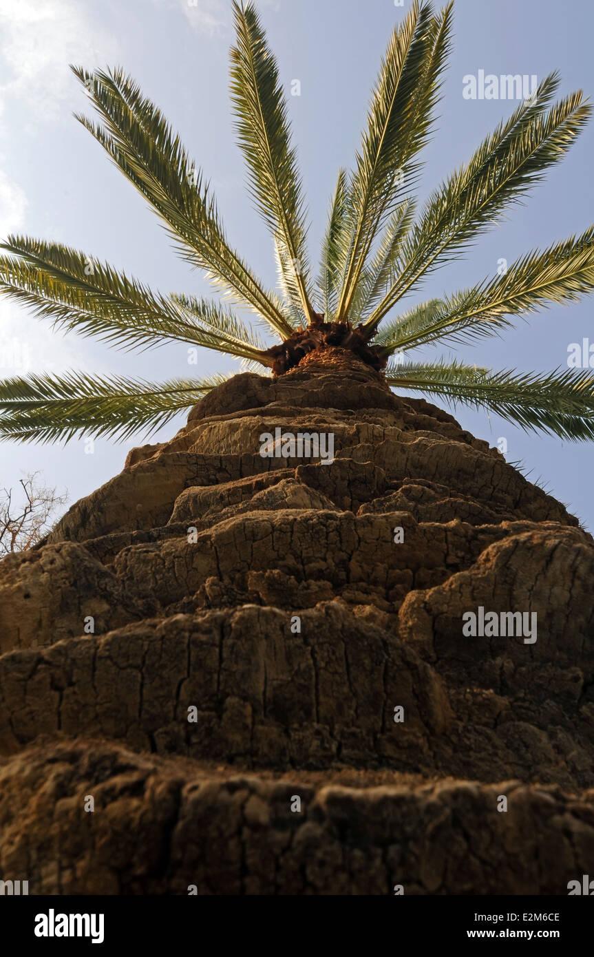 Palm Tree, tronco de árbol Imagen De Stock