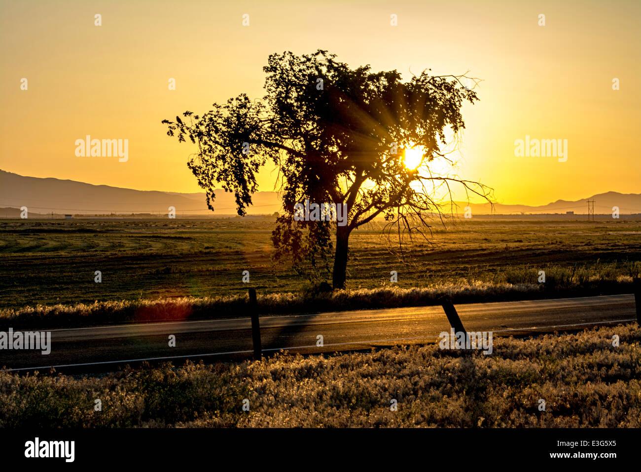 Cielo naranja con un campo Tree Farm Foto de stock
