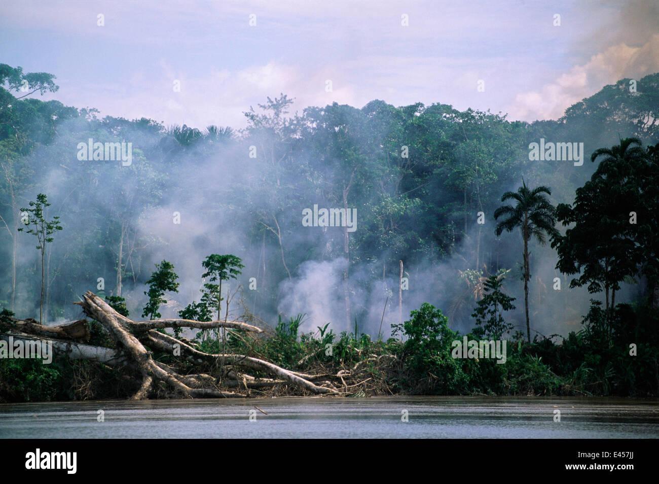La deforestación, el humo de los incendios en la selva del Amazonas a lo largo de río, Ecuador, Sudamérica Imagen De Stock