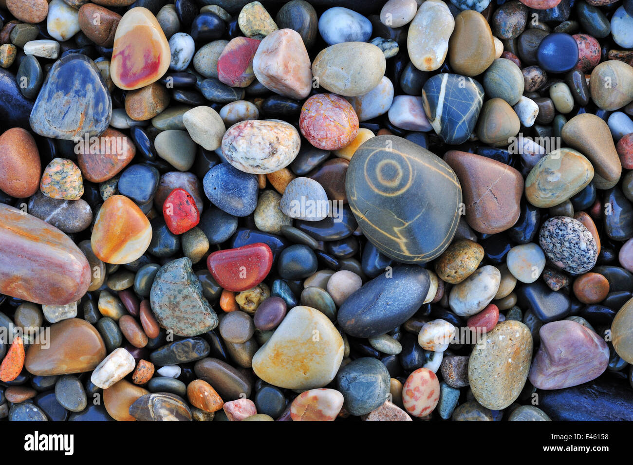 Colorido suavizan el agua guijarros en la playa de guijarros. Normandía, Francia, en octubre de 2010. Imagen De Stock