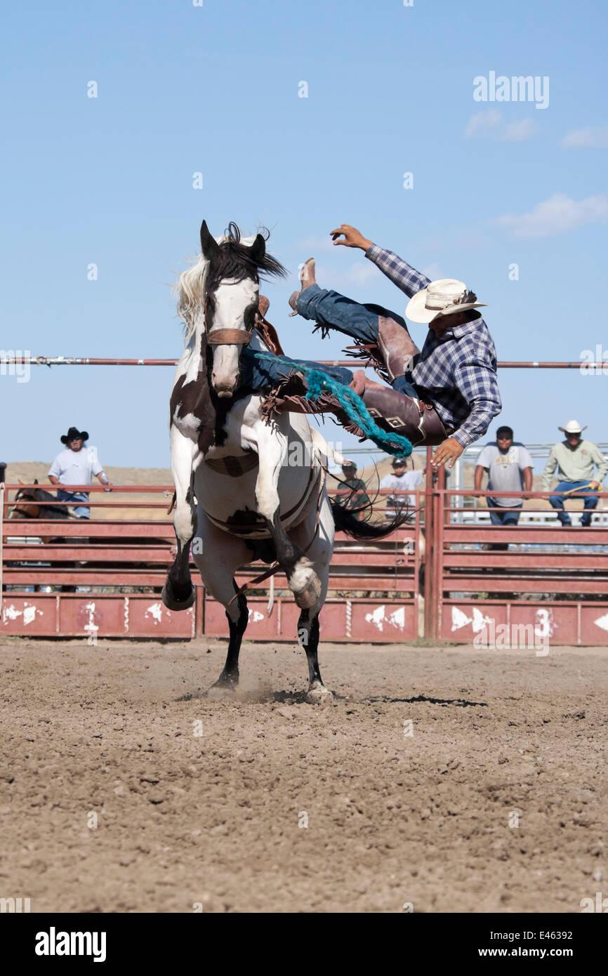 Un vaquero indio ha perdido su equilibrio desde un bronc o pintura salvaje caballo durante todo el Rodeo indio, en la anual Feria indiano Crow, en Crow Agency, cerca de Billings, Montana, EE.UU., en agosto de 2011, la secuencia 3/3 Foto de stock