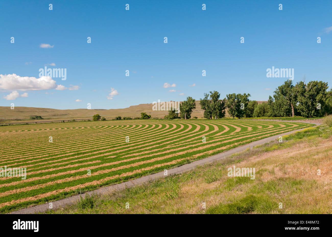 Washington, el Palouse, granja agrícola de contorno arando Imagen De Stock