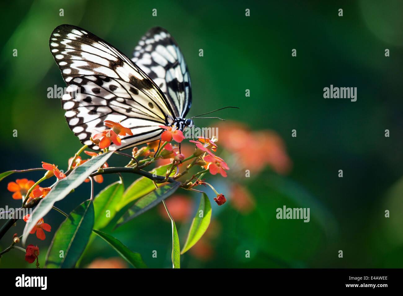 Hermosa mariposa sobre flores rojas Imagen De Stock