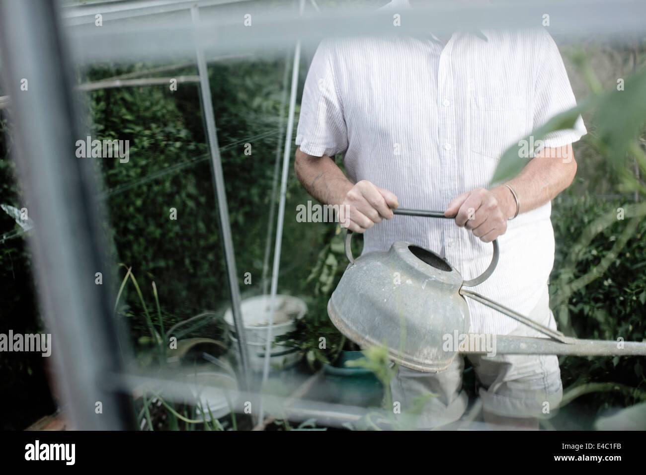 Hombre regar las plantas en invernadero Foto de stock