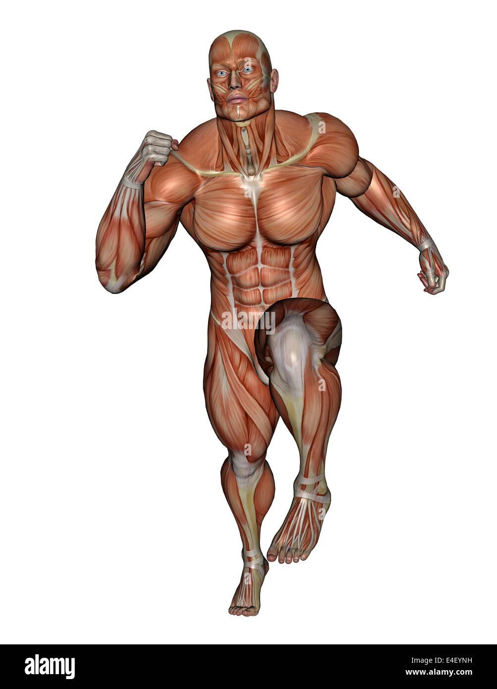 Hombre corriendo muscular, aislado sobre fondo blanco. Imagen De Stock