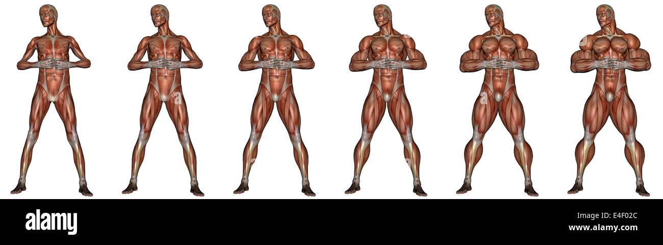 Conjunto de seis hombres mostrando la progresión a convertirse en un hombre musculoso, aislado sobre fondo Imagen De Stock