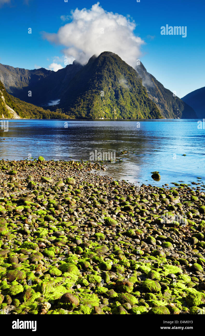 Milford Sound, Isla del Sur, Nueva Zelanda Imagen De Stock