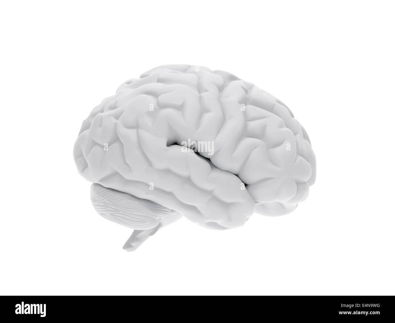 3D cerebro humano Imagen De Stock