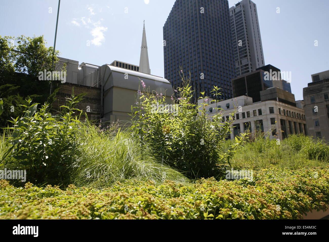 La Agricultura Urbana En El Chicago City Hall En La Terraza