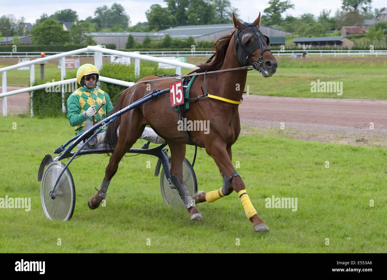Las carreras de caballos, carreras de arnés en el hipódromo, Vire Racecourse, Normandía, Francia, Imagen De Stock