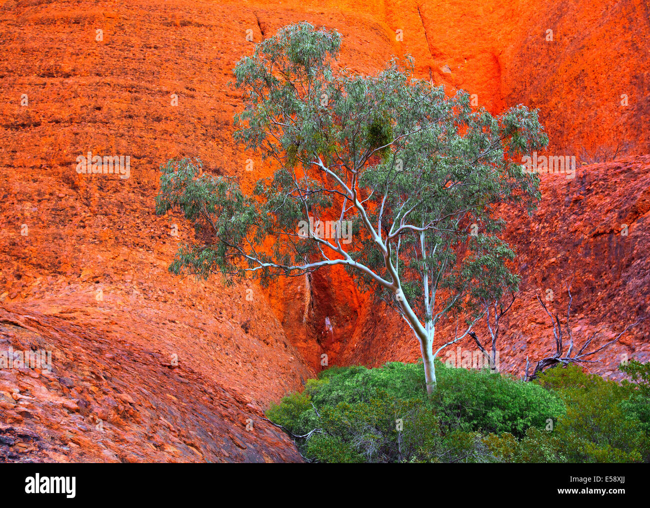 En el centro de Australia Northern Territory Olgas Kata Juta Imagen De Stock