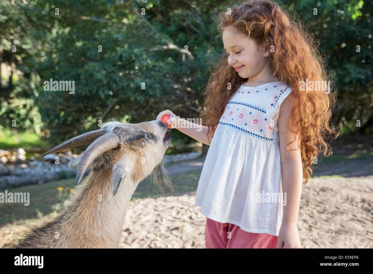 Chica La alimentación de animales en el bosque Imagen De Stock