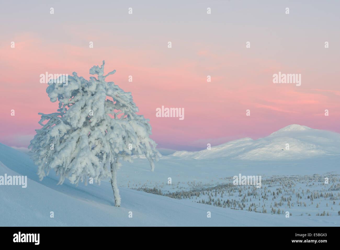 Árbol congelada en invierno el paisaje durante el amanecer Foto de stock