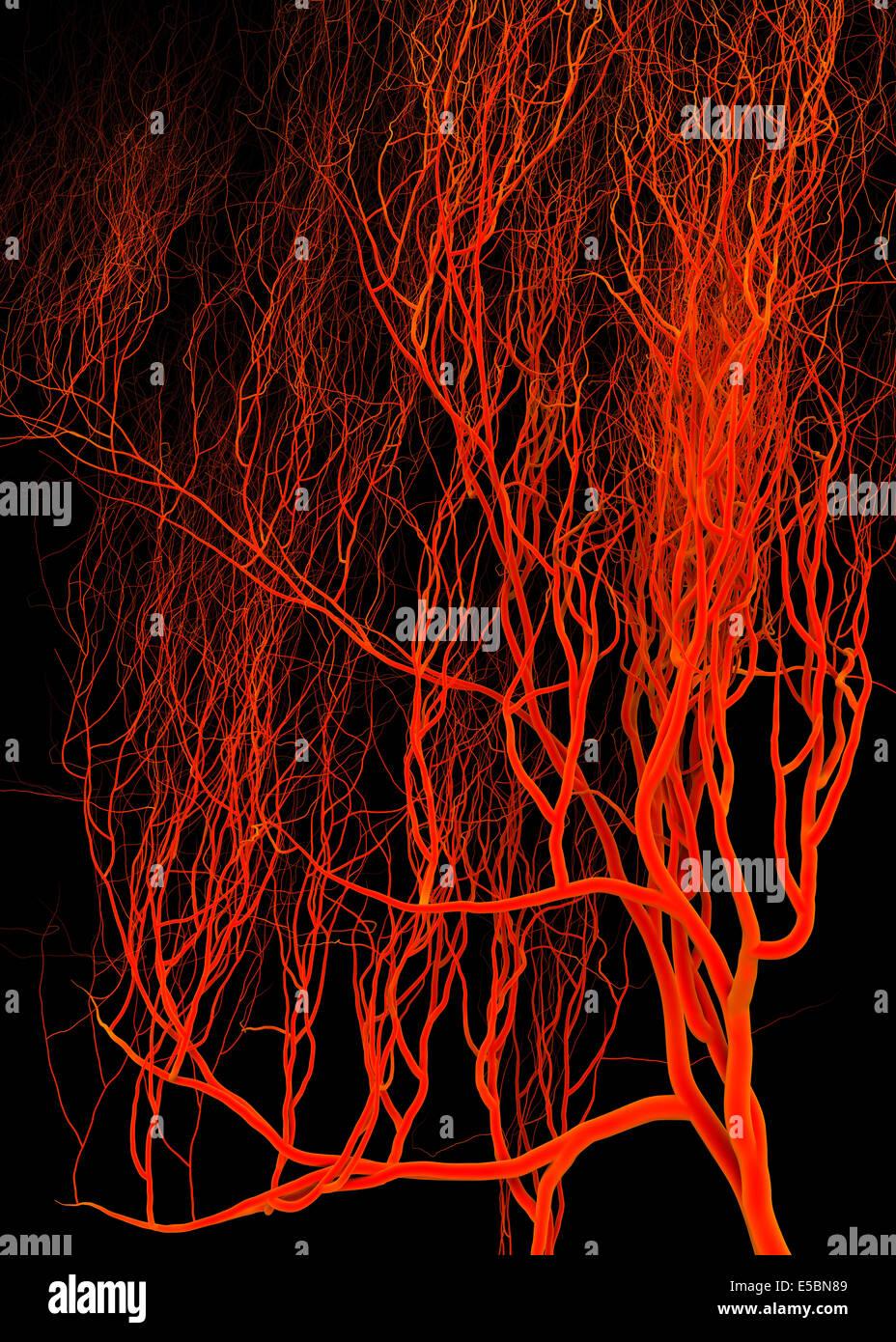 Nervioso o sistema de sangre. Ilustración médica Imagen De Stock