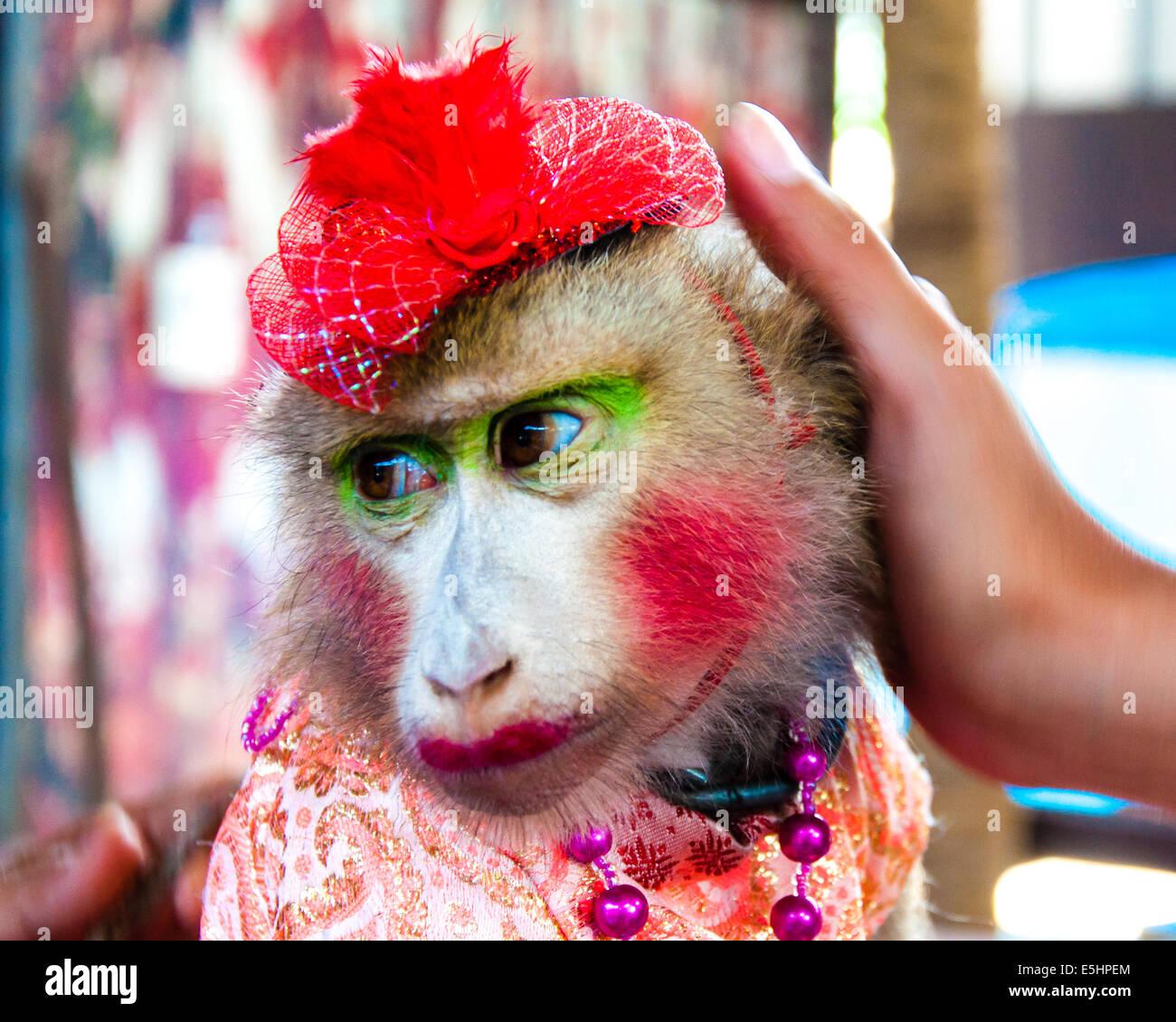 hermosa en color mayor selección de muy elogiado Retrato de entrenados monos vestidos posando con turistas en ...