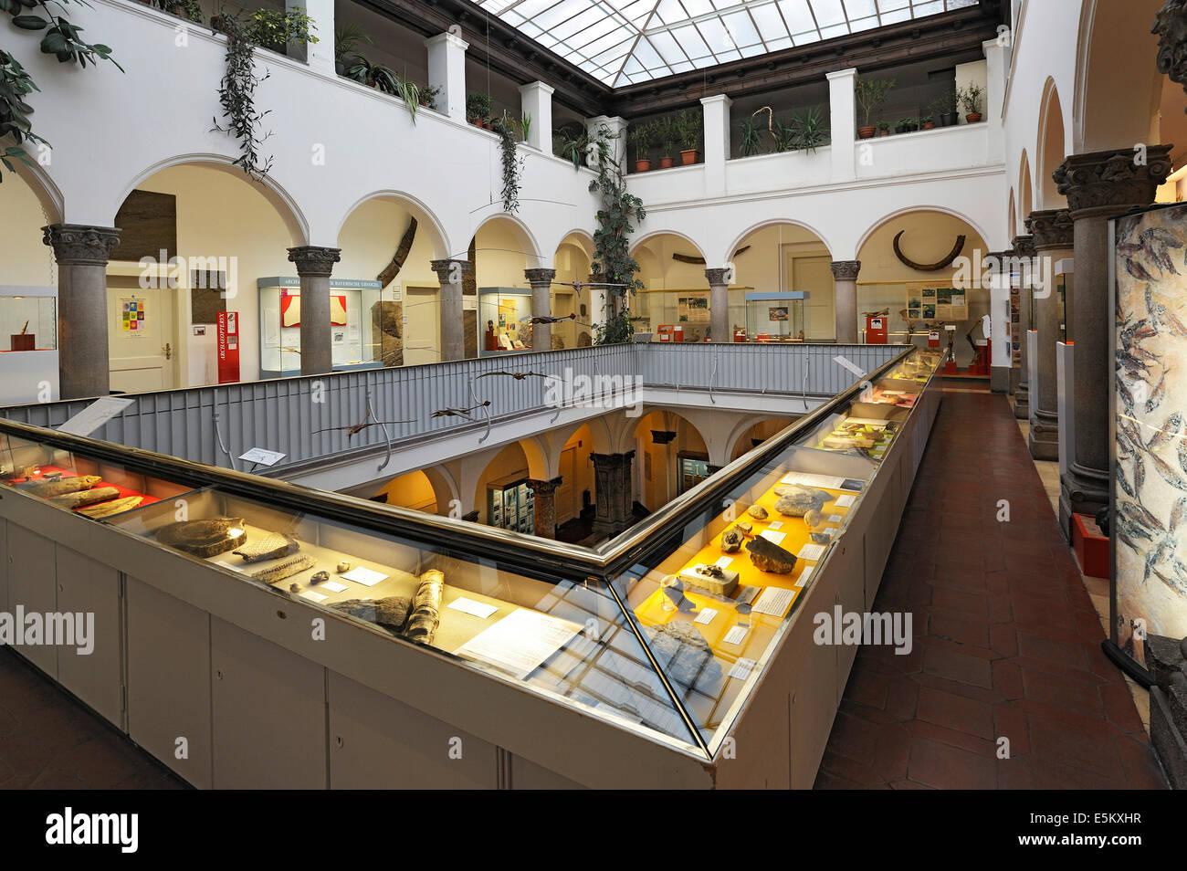 Primer piso, museo Paleontológico, Munich, Baviera, Alemania Imagen De Stock