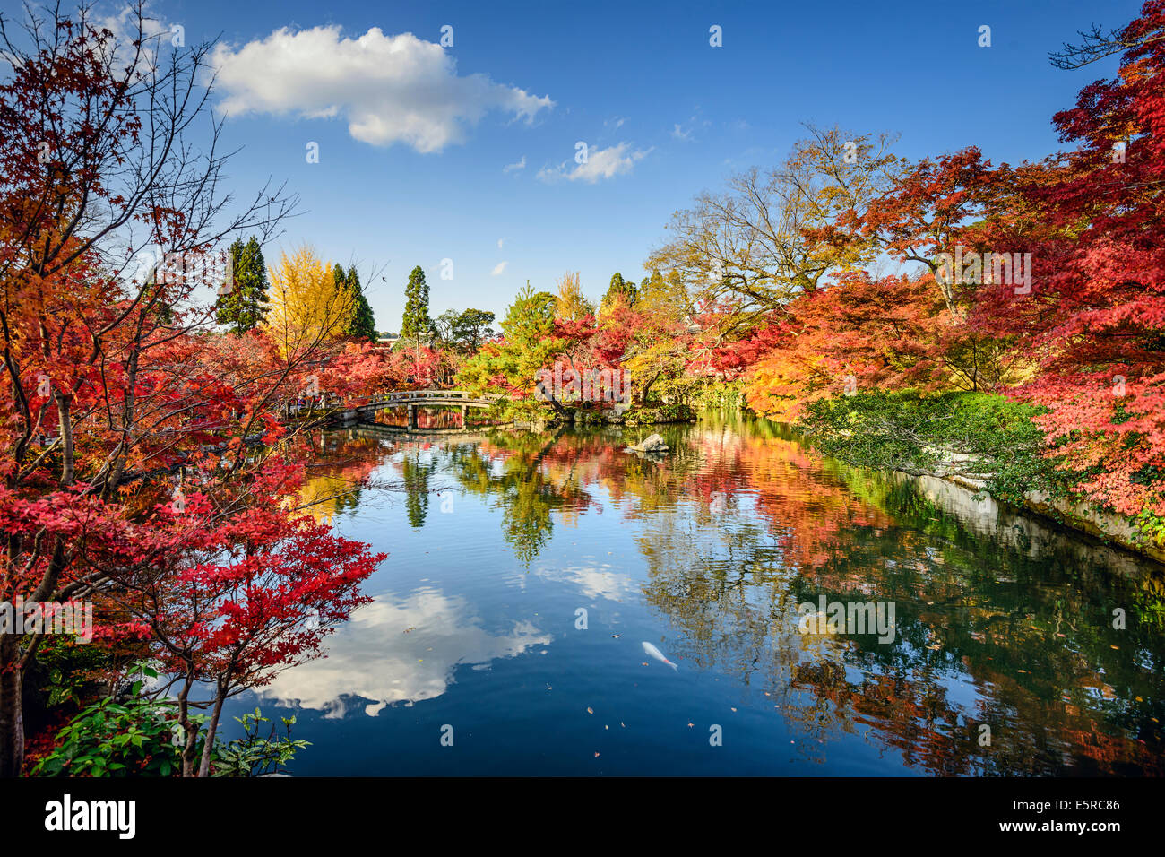 Kyoto, Japón el follaje de otoño en el Santuario Eikando jardín. Foto de stock