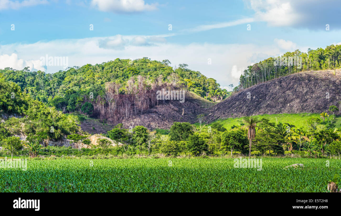 La deforestación en Guatemala. Imagen De Stock