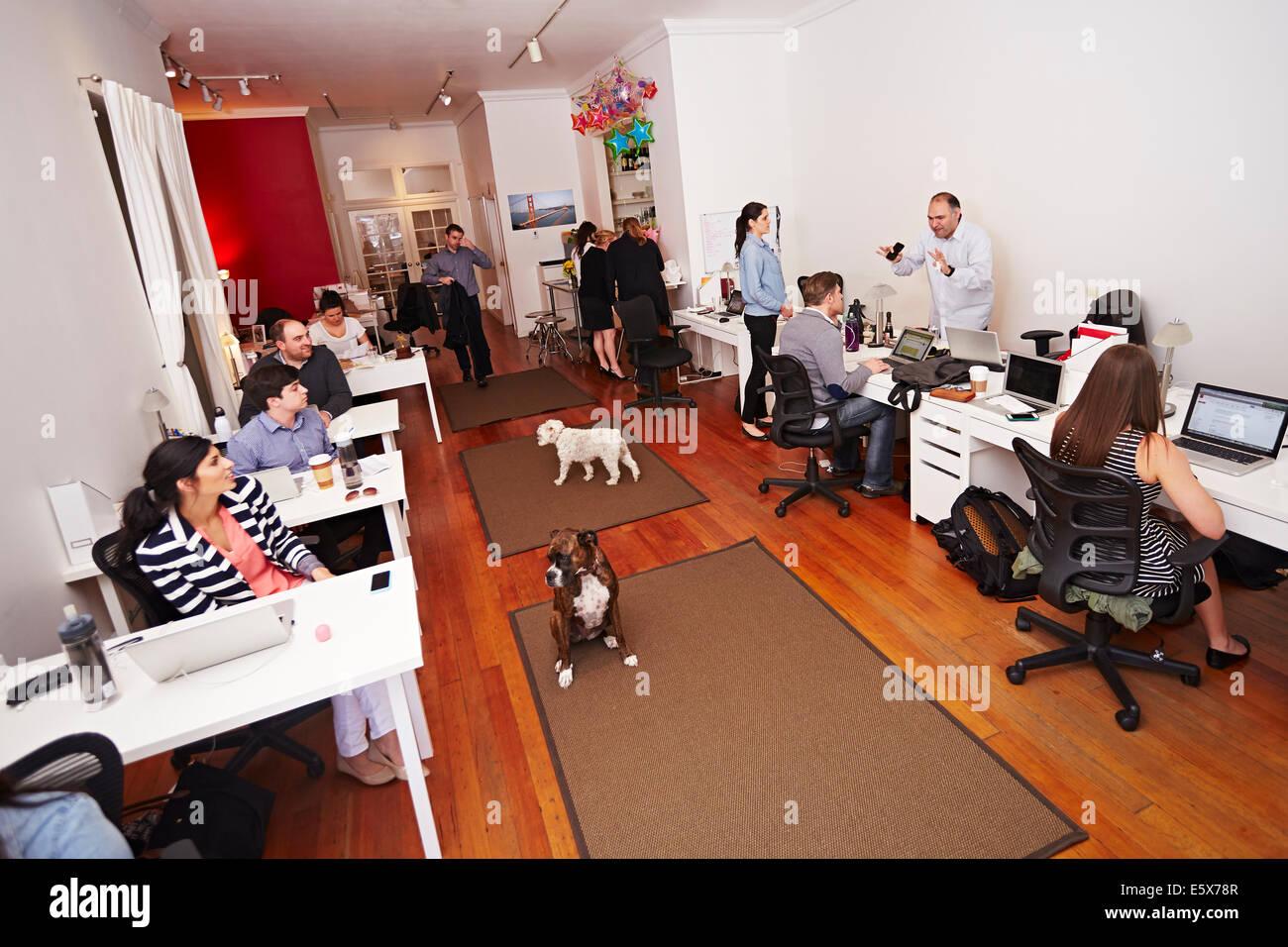 Las personas en el trabajo en una oficina moderna con perros Imagen De Stock
