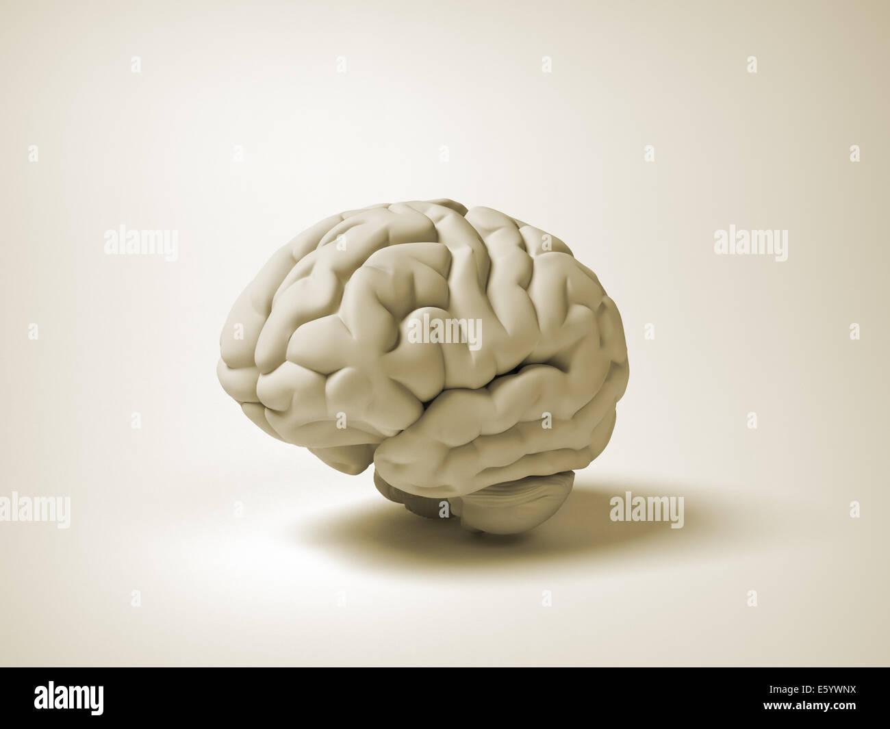 Cerebro Humano conceptual - 3D Render ilustración Imagen De Stock