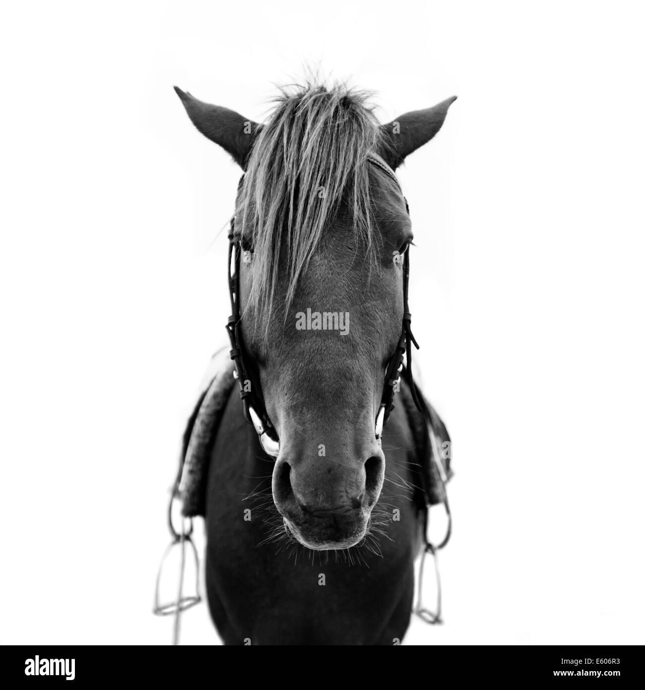 Cabeza de caballo Imagen De Stock