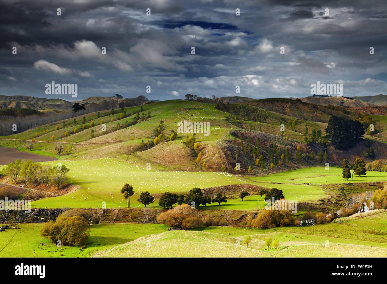 Paisaje con tierras de labranza y cielo nublado, Isla del Norte, Nueva Zelanda Foto de stock