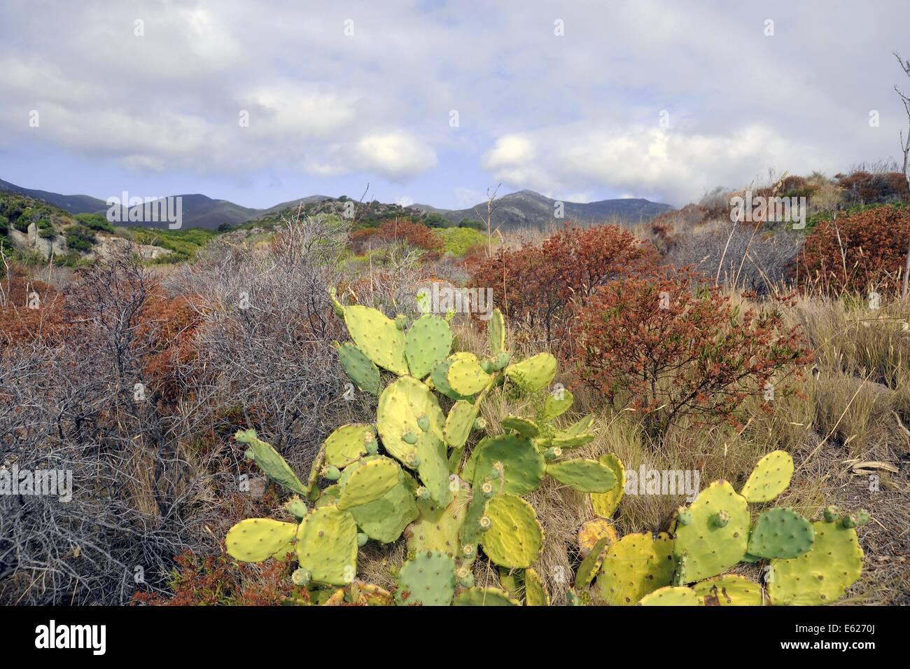 Capraia isla (Archipiélago de la Toscana, Italia) Imagen De Stock