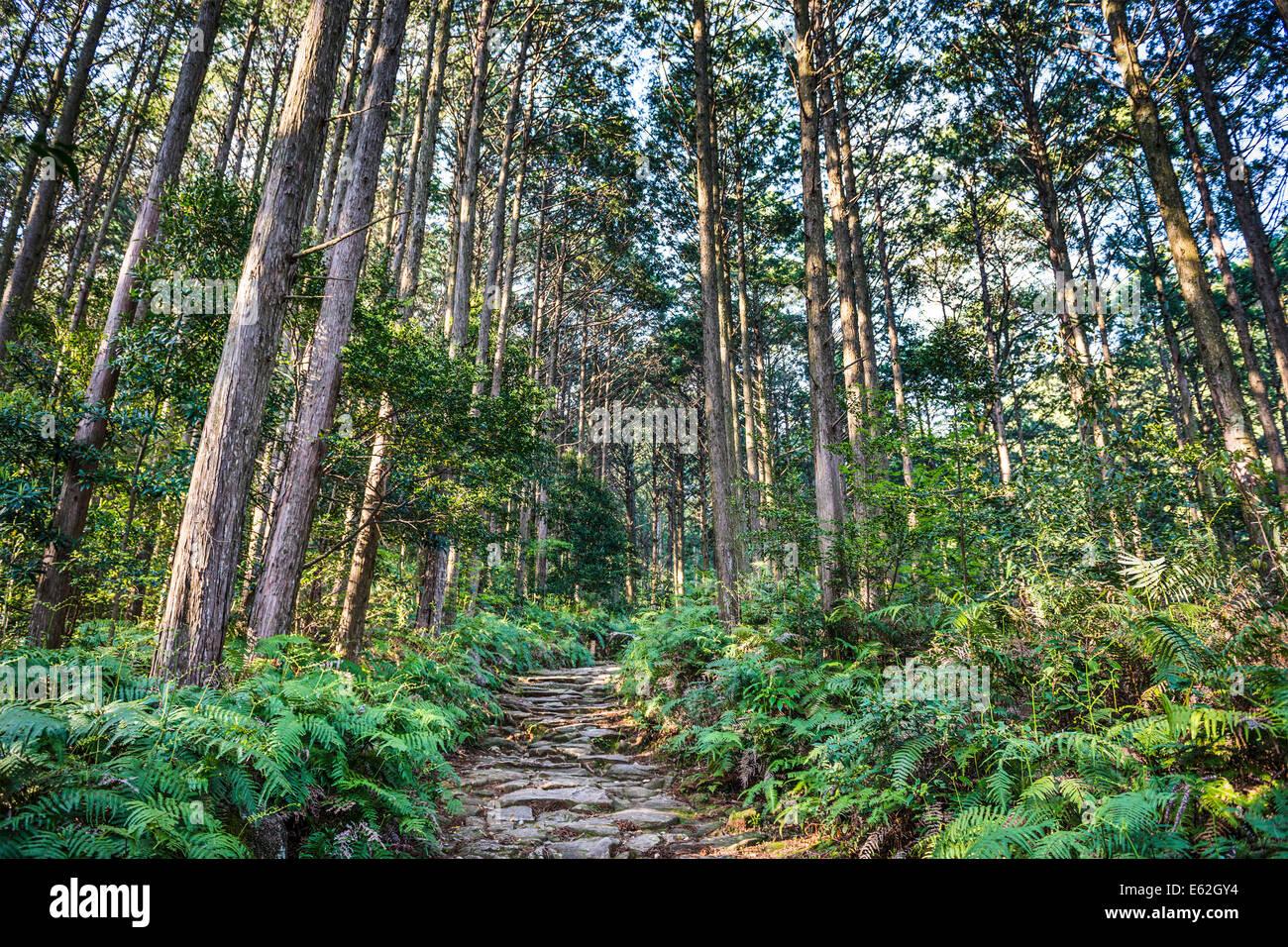 Kumano, Japón en el Matsumoto Pass. El pase es parte del Kumano Kodo, una serie de antiguas rutas de peregrinación. Imagen De Stock