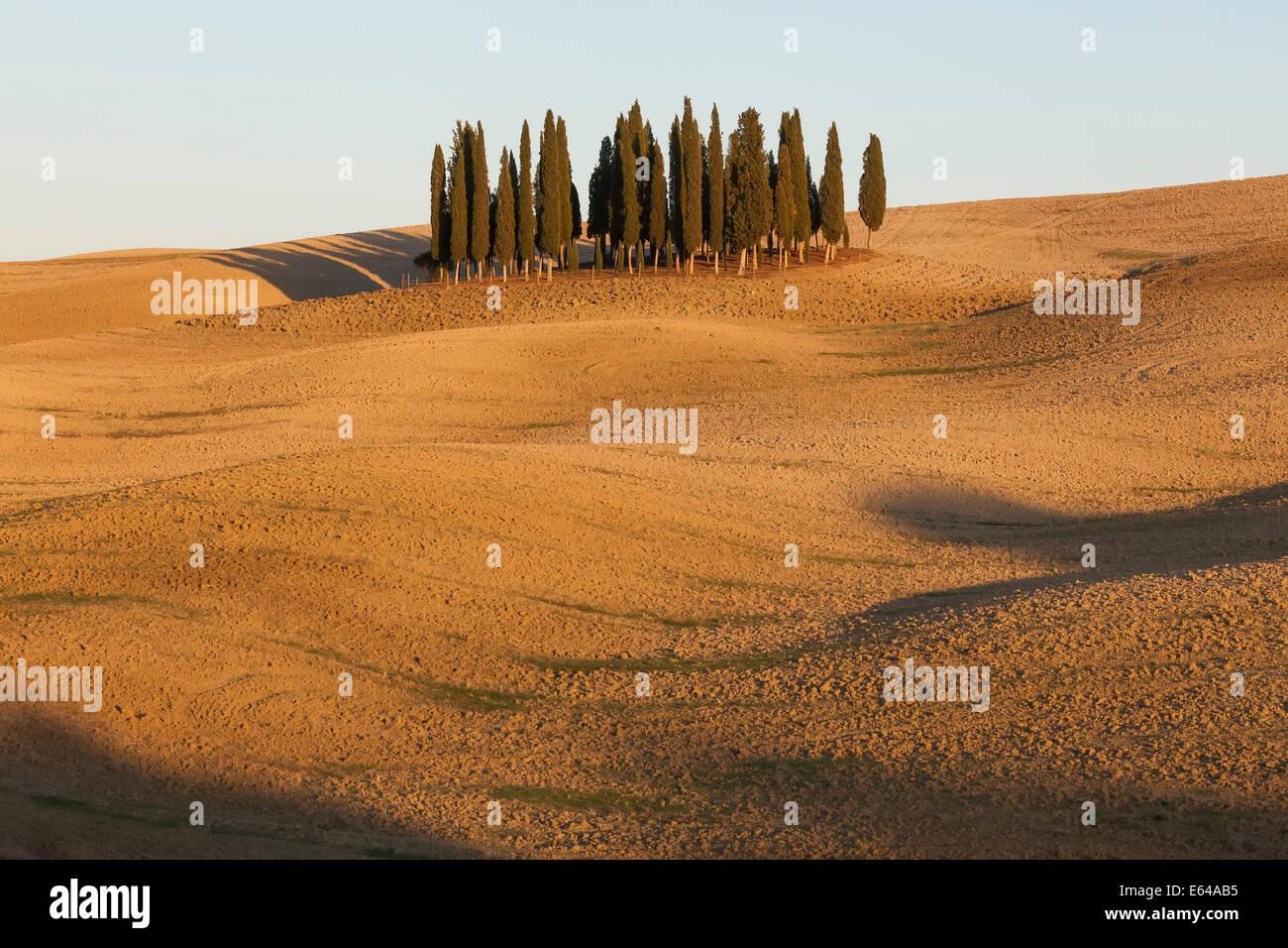 Cipreses toscanos cerca de San Quirico d'Orcia, en el Val d'Orcia, Toscana, Italia. Imagen De Stock