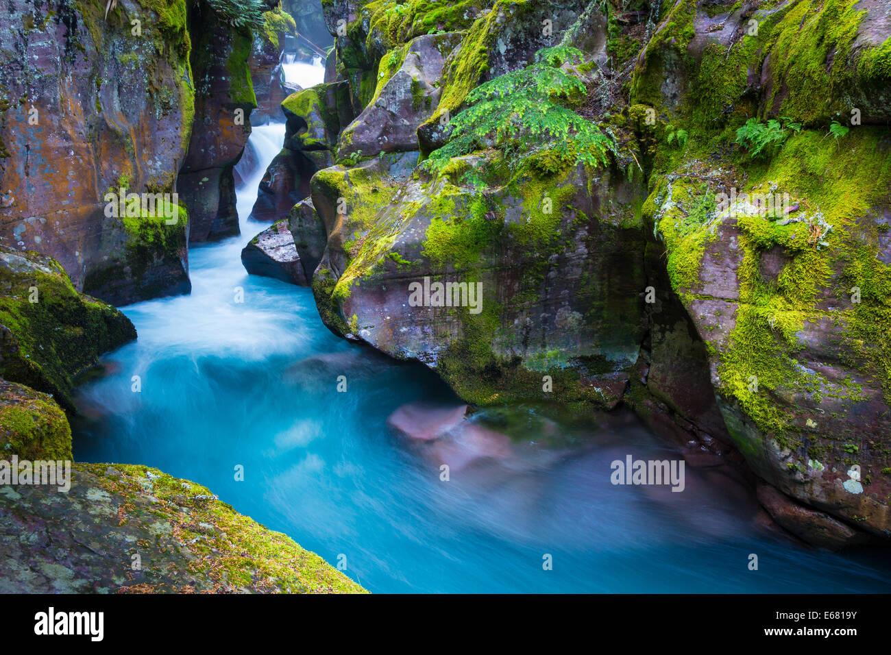 Avalancha Creek gorge en Glacier National Park en Montana, situada cerca de la frontera entre Estados Unidos y Canadá Imagen De Stock