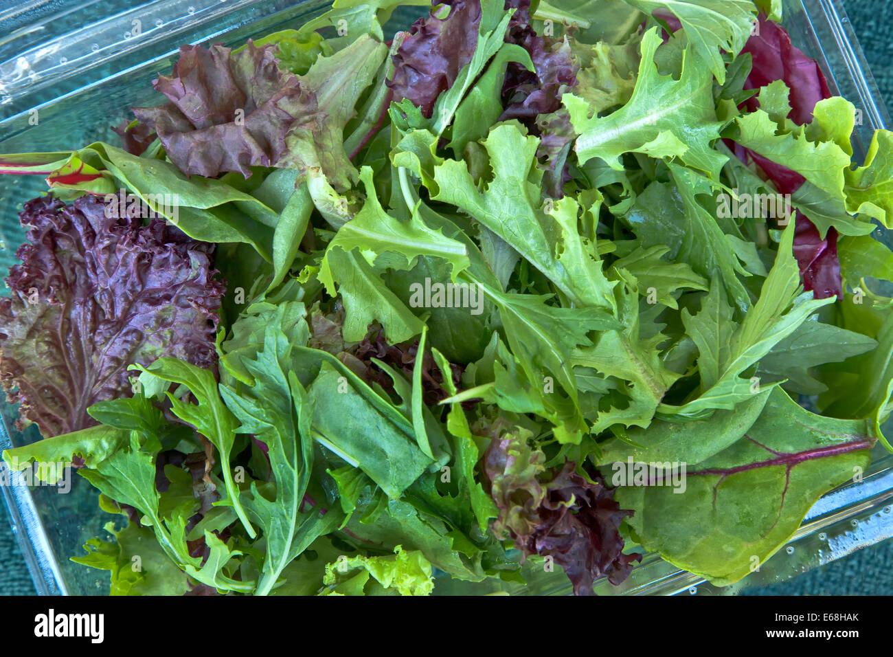 Organic baby lechuga' ensalada de primavera mix. Imagen De Stock