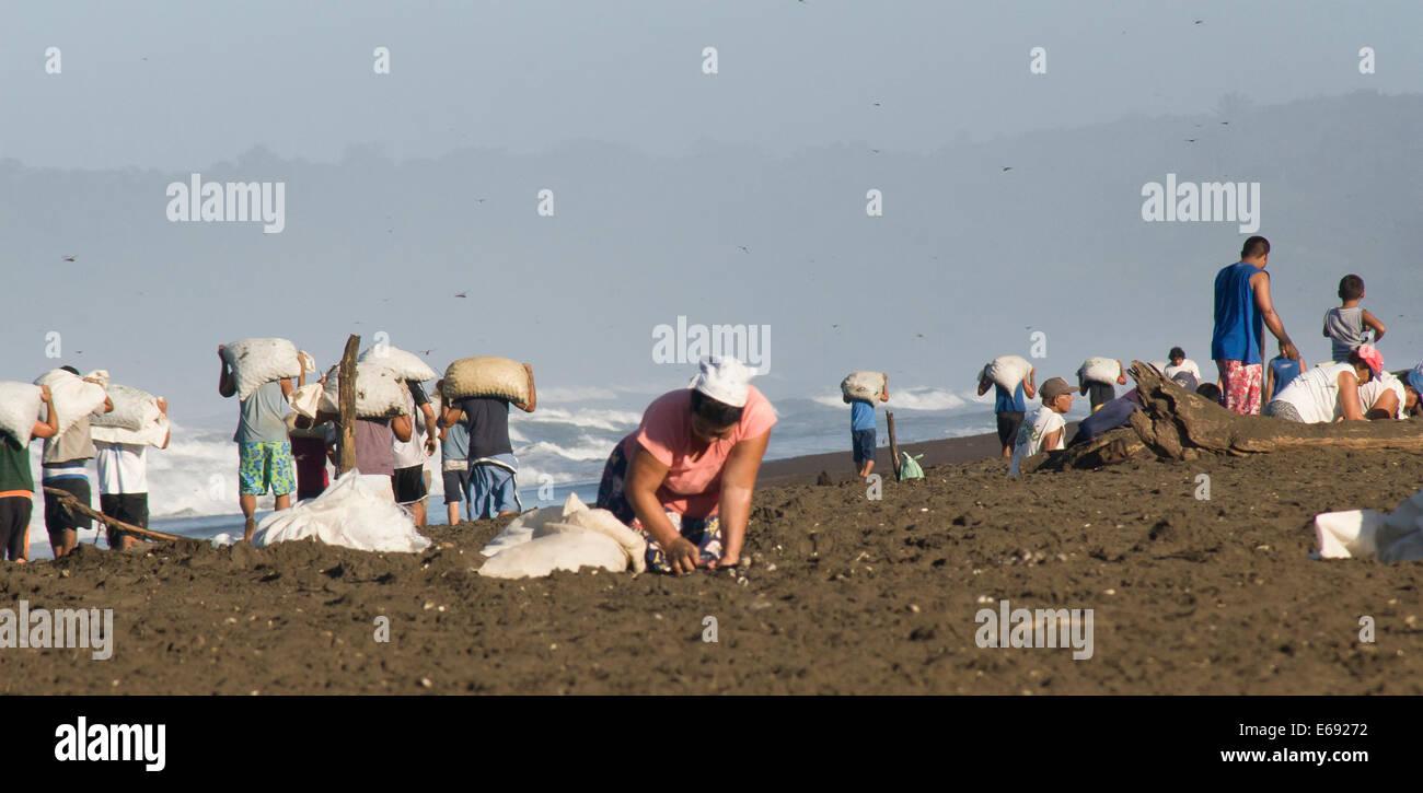 Un aldeano recoge los huevos de las amenazadas tortugas olive ridley. En el fondo, los huevos son llevados para Imagen De Stock