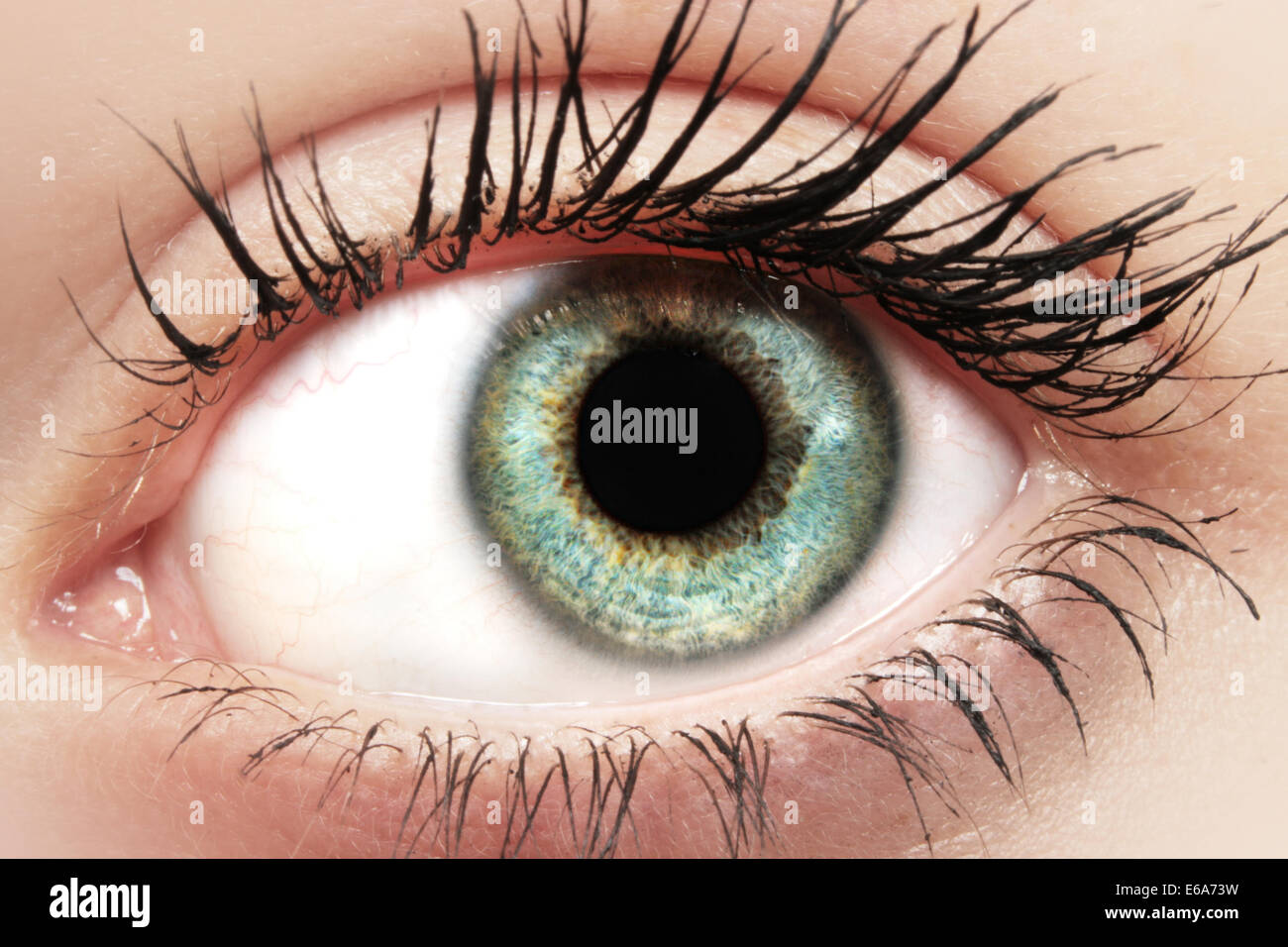 ojo, maquillaje Foto de stock