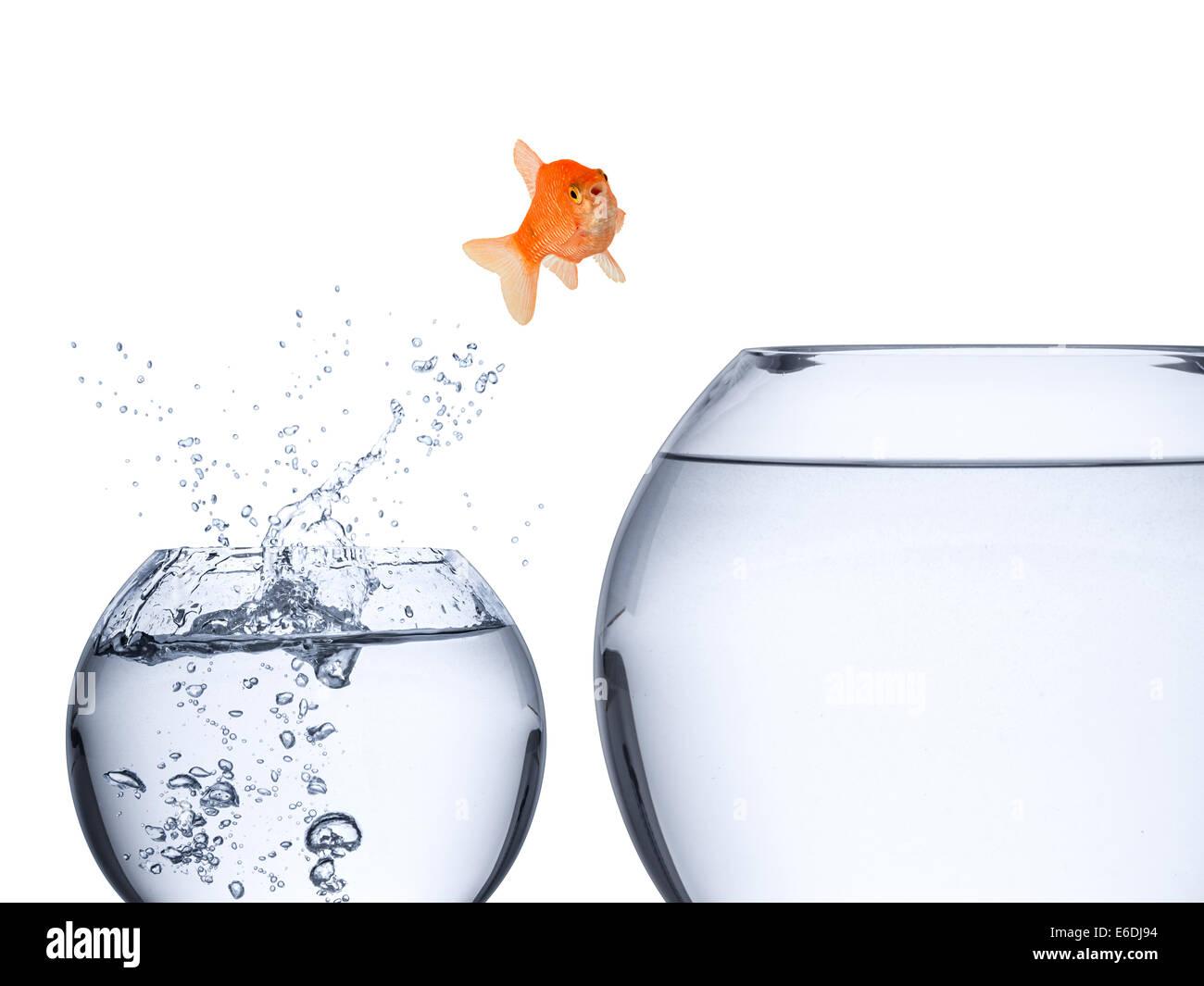 Concepto de subida de pescado Imagen De Stock