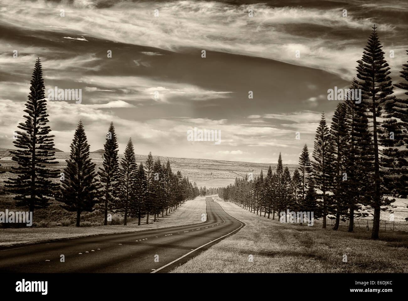 Carretera principal sobre Lanai forrado con pinos de las Islas Cook. Lanai, Hawai Foto de stock