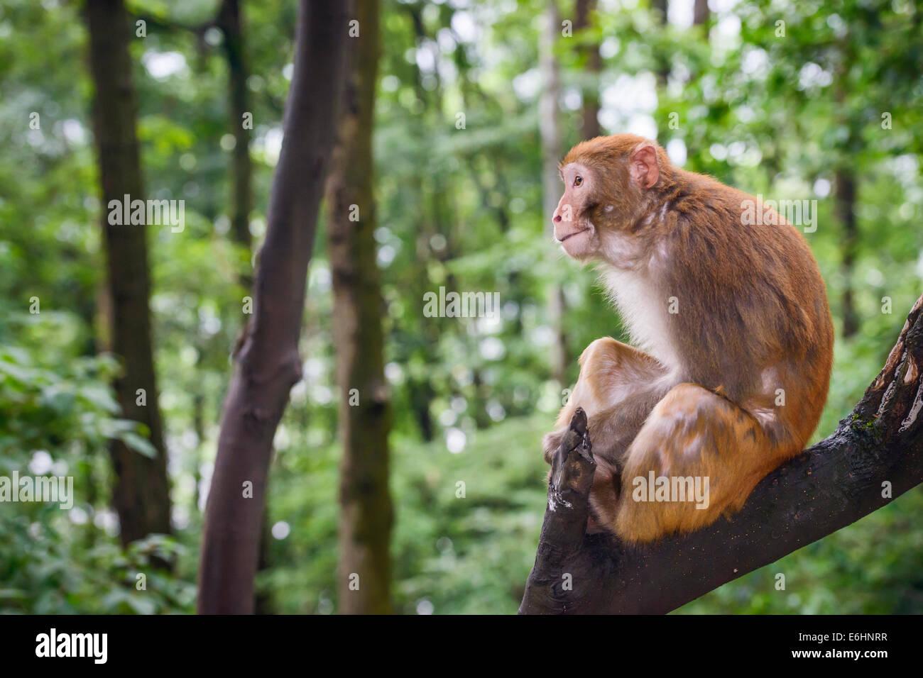 El macaco en Guiyang, China Imagen De Stock