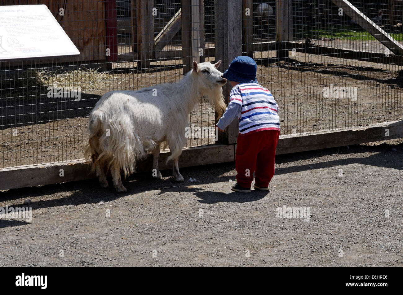 Un chico hablando a una cabra en una granja de acariciar Imagen De Stock