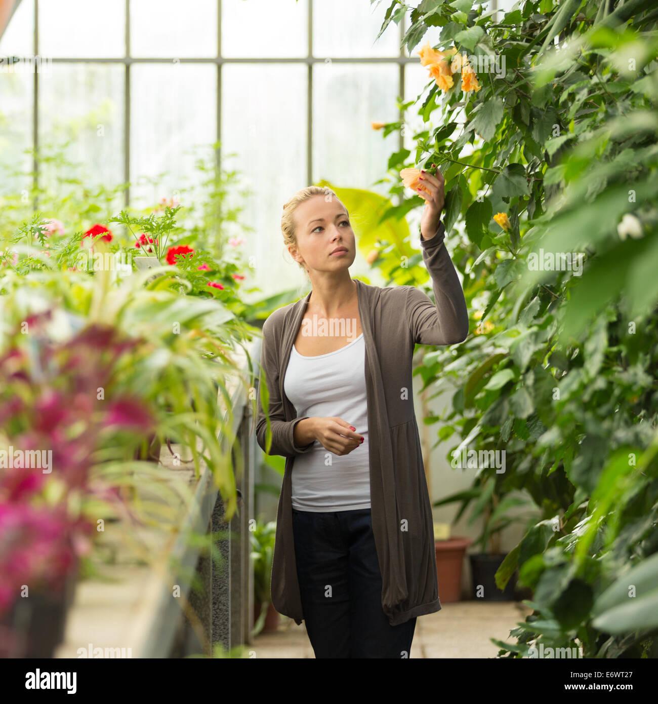Floristerías mujer trabajando en el invernadero. Foto de stock