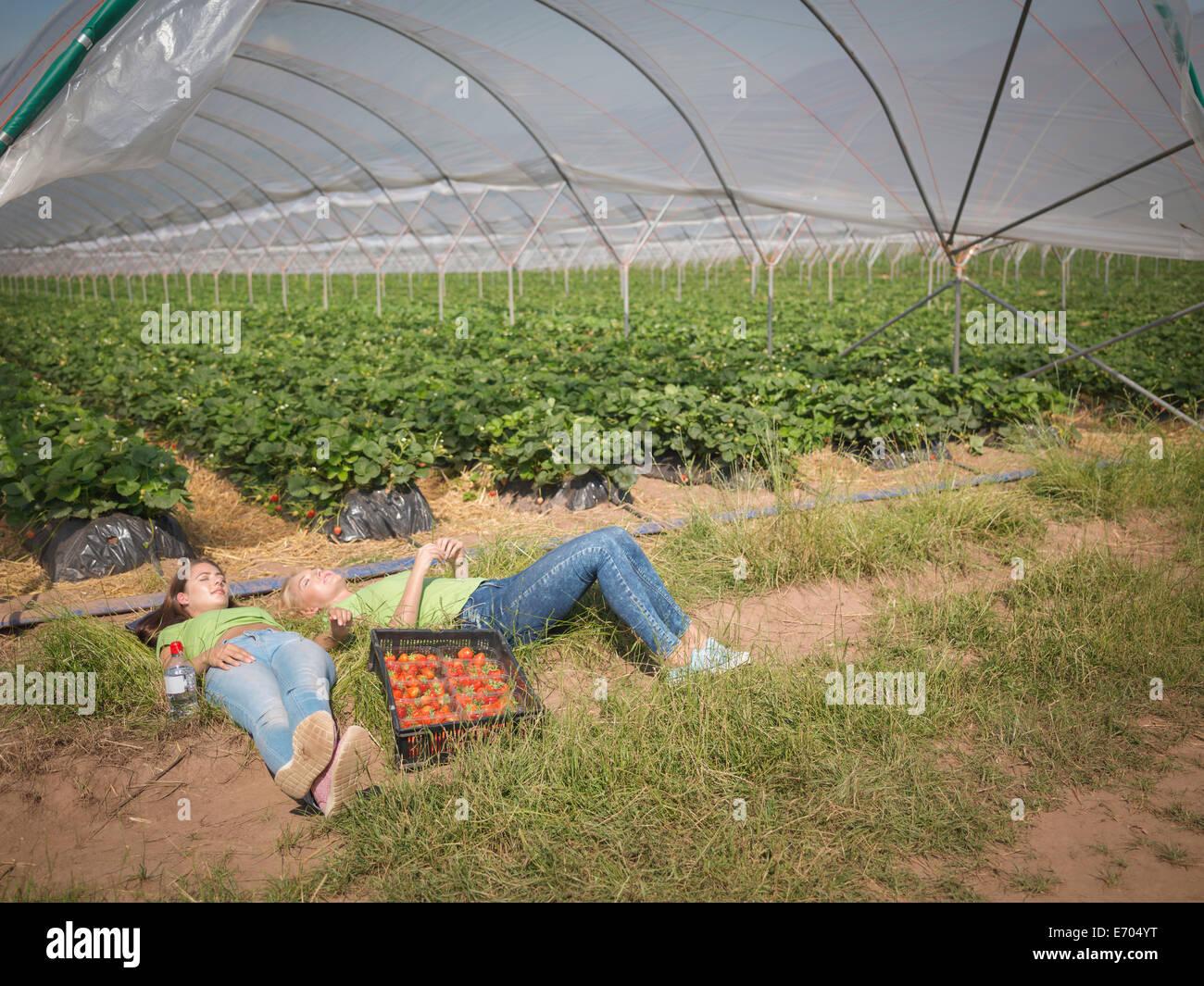 Los recolectores de fresas descansando cerca polytunnel de granja de frutas Imagen De Stock