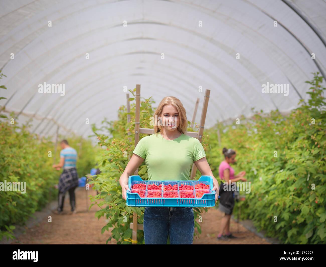 Retrato de trabajador con bandeja de frambuesas en la granja de frutas Imagen De Stock