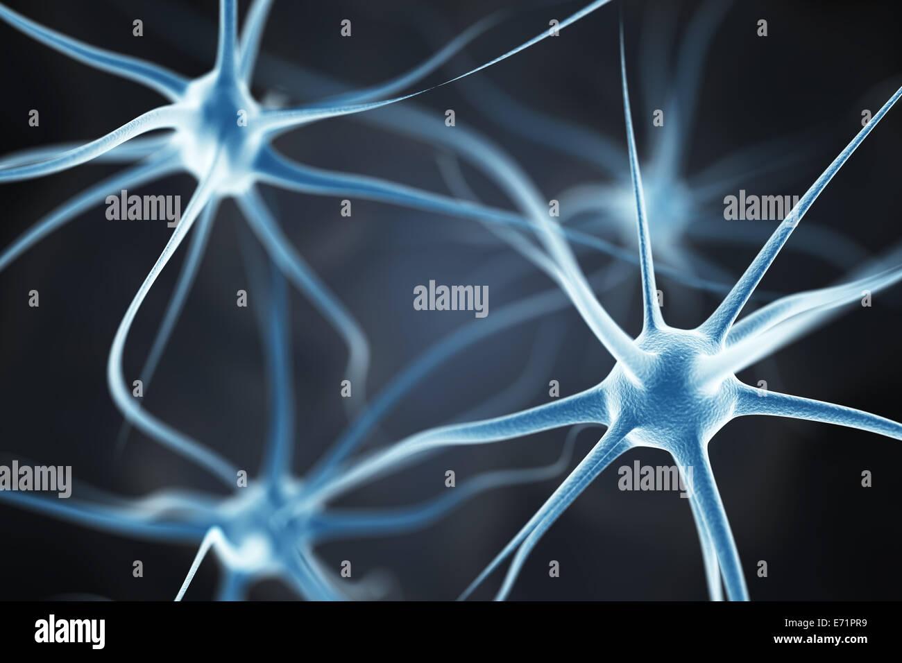 Las neuronas en el cerebro Imagen De Stock