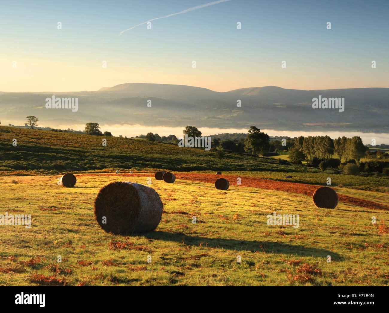 La luz del sol de la mañana en fardos en Welsh commonland con misty opiniones, y heno Bluff y el negro de las montañas en la distancia Foto de stock
