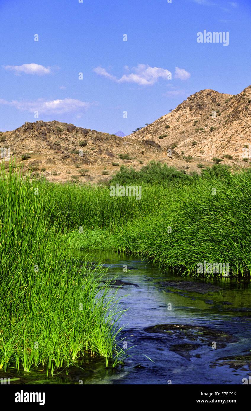 Río termal con agua caliente corriendo a través de lechos de juncos en AL LITH ARABIA SAUDITA Imagen De Stock