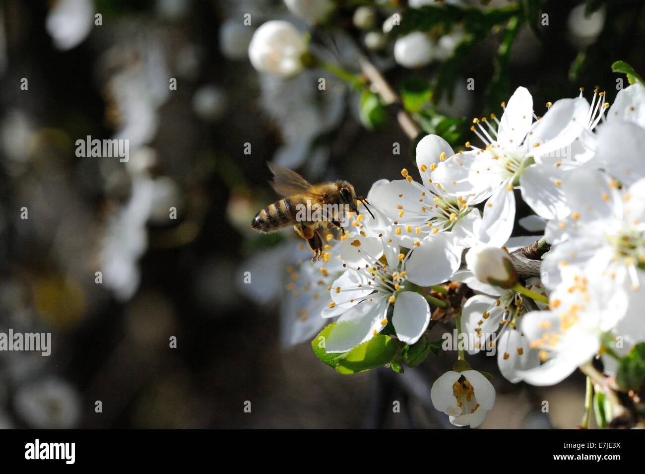 Flores, primavera, árboles en flor, flores, brotes tiernos, fruta, flores, pétalos de flores, árboles, Imagen De Stock