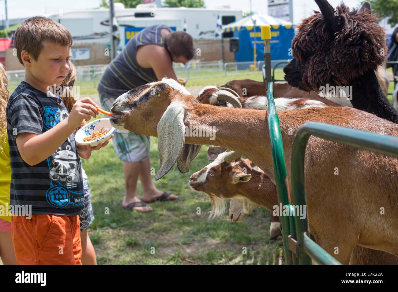 Sterling Heights, Michigan - Niños los animales en un zoológico de contacto durante el festival. Imagen De Stock