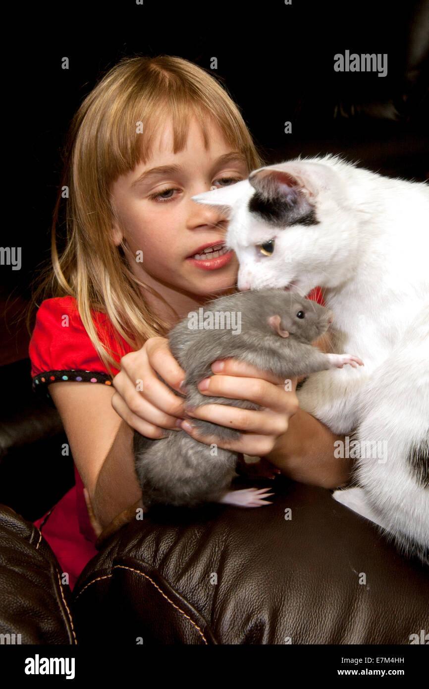Una niña de 9 años presenta su Misty blue pet rat a su gato en casa en Lake Forest, California. Imagen De Stock