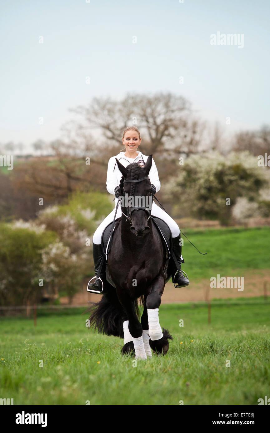 O el frisón frisón caballo semental, trote con una mujer jinete sobre un caballo, en medio de un prado, Imagen De Stock