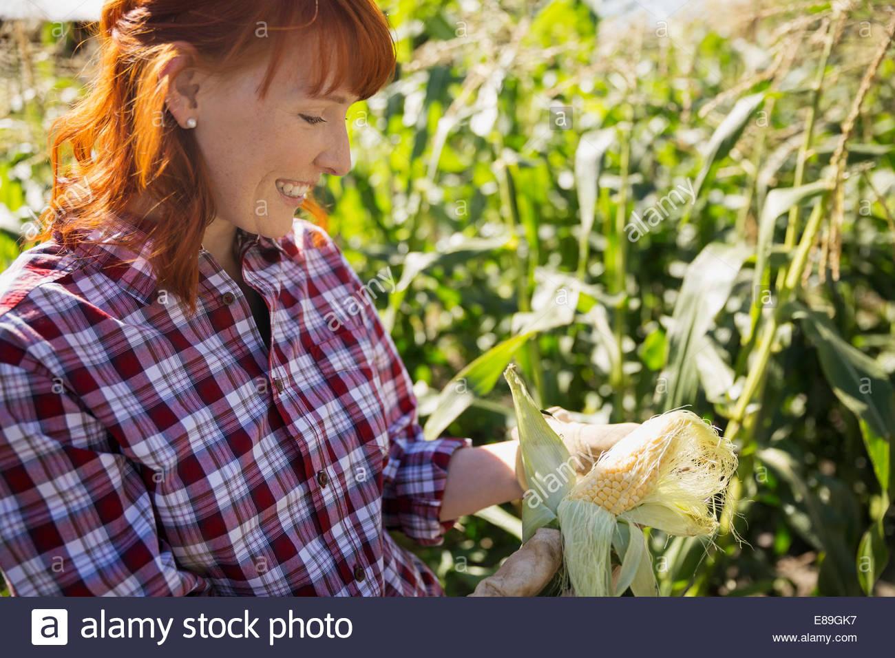 Mujer en la cosecha de maíz de comprobación Imagen De Stock
