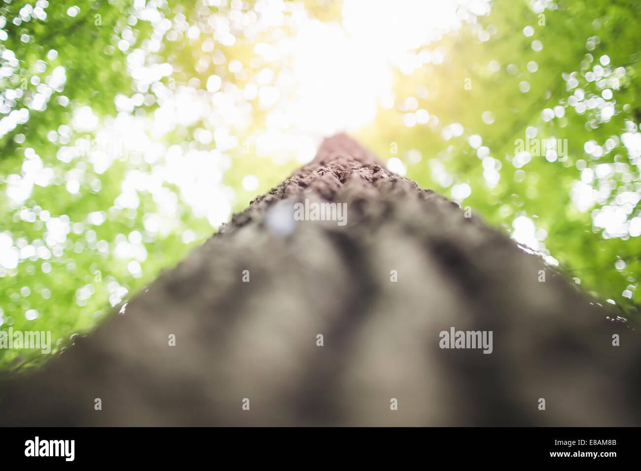 Tronco de árbol, ángulo bajo Imagen De Stock